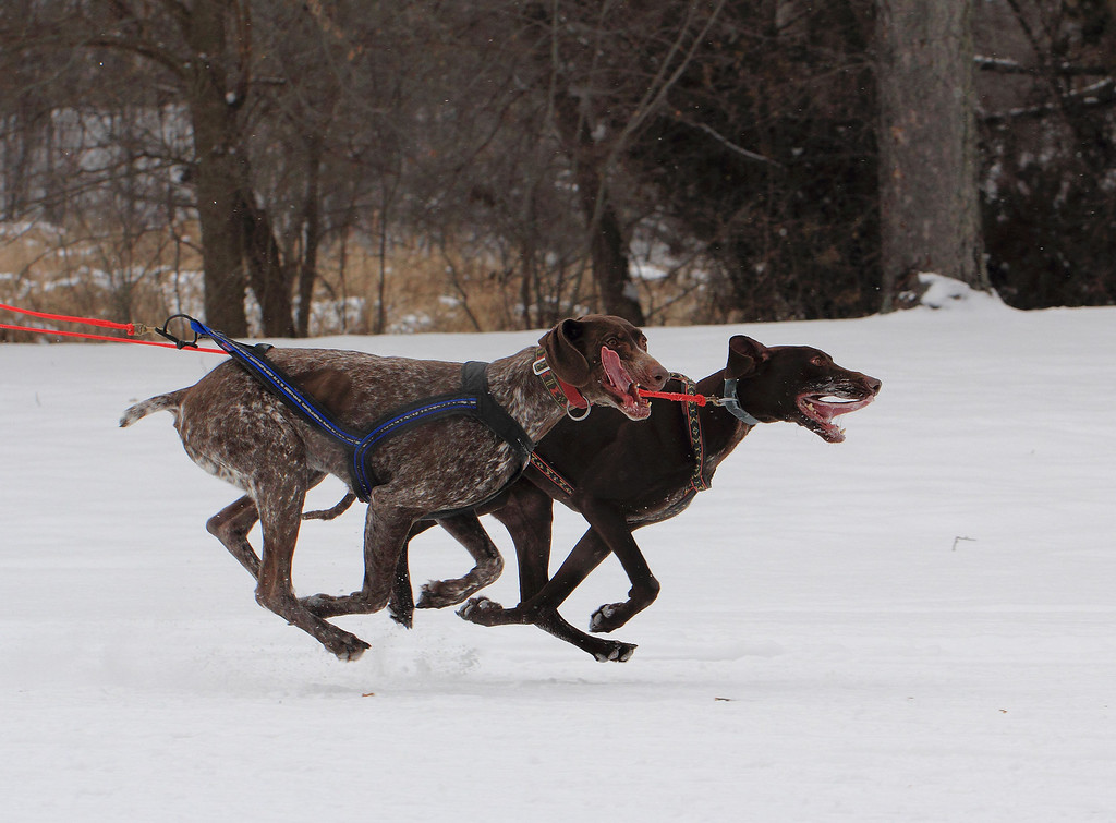 IMAGE: http://imagesbybruce.smugmug.com/Other/City-of-Lakes-Loppet-Weekend/i-zpcHwsV/0/XL/IMG_3669-XL.jpg