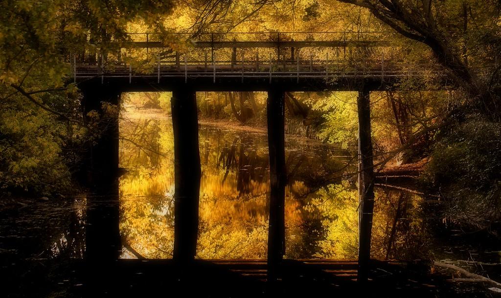 IMAGE: https://imagesbybruce.smugmug.com/Flowers/Fall-in-Minnesota/i-6dMZNWc/0/XL/IMG_8362-XL.jpg