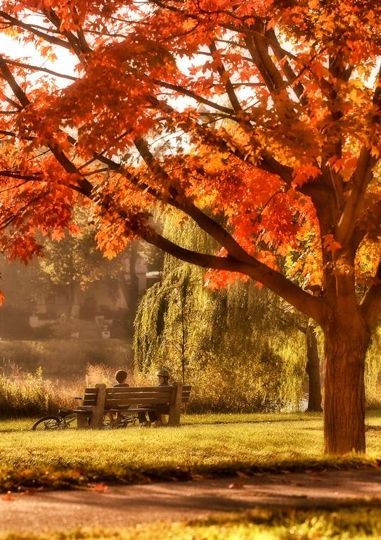 IMAGE: https://imagesbybruce.smugmug.com/Flowers/Fall-in-Minnesota/i-VHfGMKs/0/XL/IMG_8176-XL.jpg